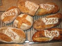 Sourdough-hope